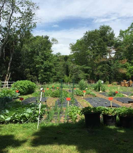 Lotus Community Garden